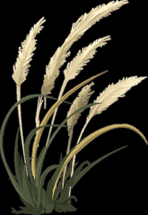 wheat-576548_960_720